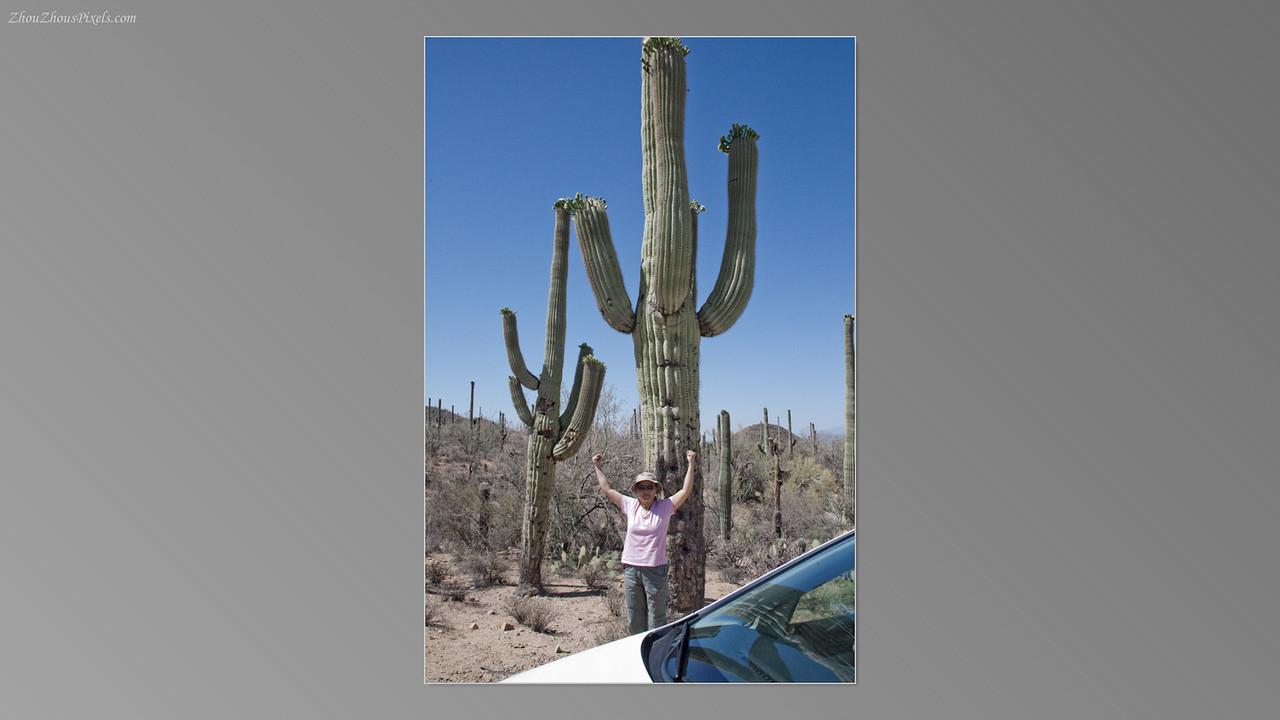 2012_05_14-2 (Saguaro & Desert Museum)-18