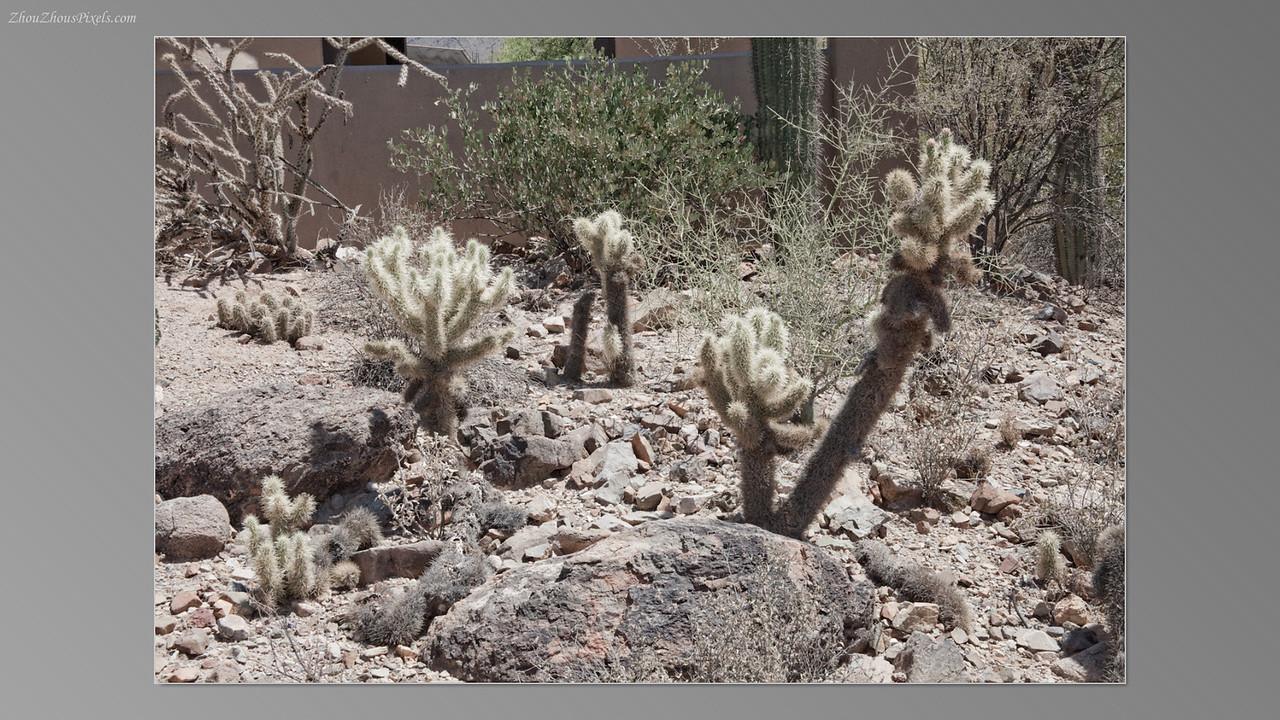 2012_05_14-2 (Saguaro & Desert Museum)-33