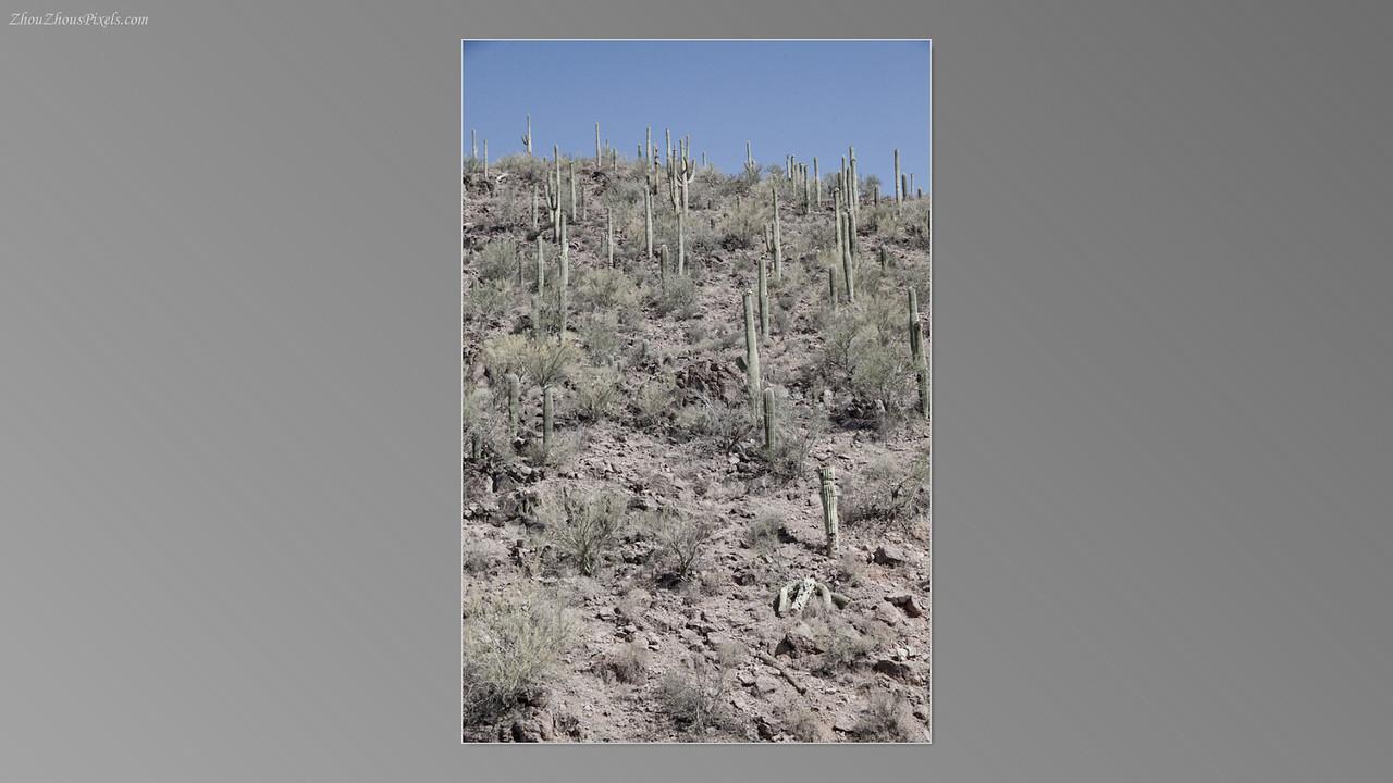 2012_05_14-2 (Saguaro & Desert Museum)-04