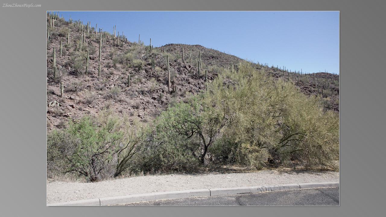 2012_05_14-2 (Saguaro & Desert Museum)-05