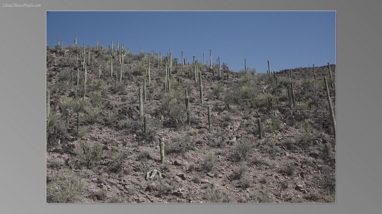 2012_05_14-2 (Saguaro & Desert Museum)-02