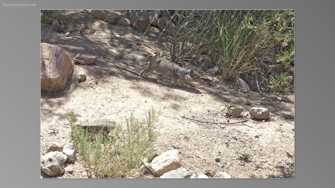 2012_05_14-2 (Saguaro & Desert Museum)-39