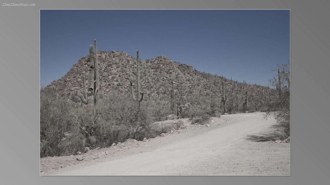2012_05_14-2 (Saguaro & Desert Museum)-29
