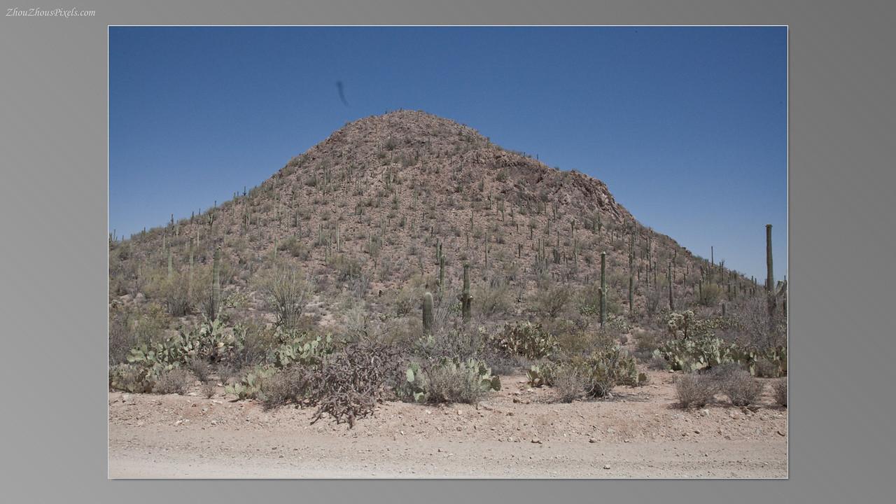 2012_05_14-2 (Saguaro & Desert Museum)-30