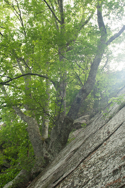_kd33999 2012-06-16 Asheville