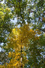 dsc02406 2012-10-13 Hiawassee Georgia