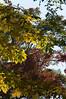 dsc02405 2012-10-13 Hiawassee Georgia