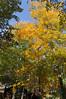 dsc02409 2012-10-13 Hiawassee Georgia
