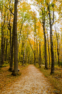 Follow the Yellow Leaf Road!