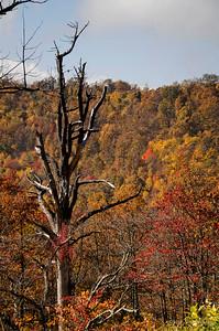 Dead Tree #1257