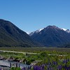 Lupines and Mountains