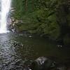 Playful pups in waterfall