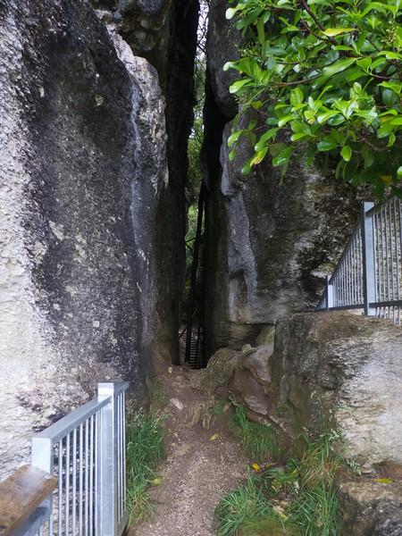 The Grove Scenic Reserve