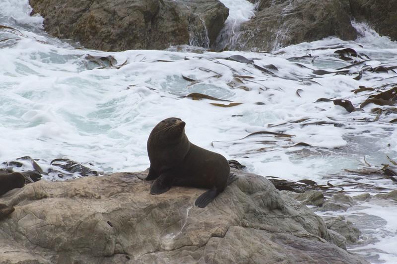 Papa seal