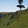 Kaikoura Peninsula Walkway  lone tree