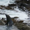 Seal among kelp