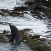 Seal among kelp
