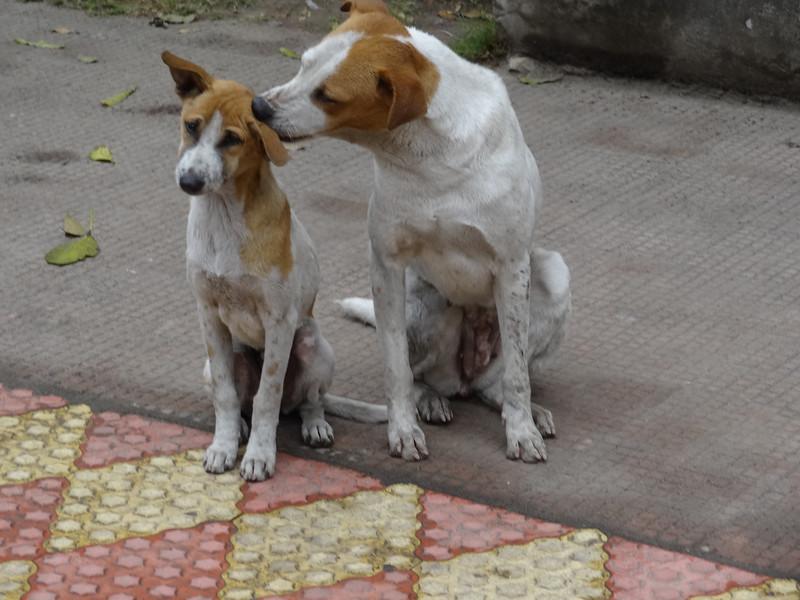 Salt Lake dogs - A Salt Lick?