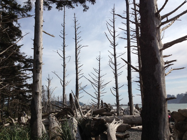 2013-08 Evelyn - Olympic National Forest (12)