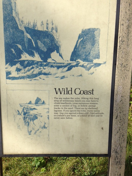 2013-08 Evelyn - Olympic National Forest (11)