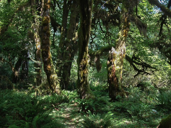 2013-08 Evelyn - Olympic National Forest (39)