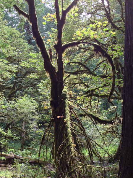 2013-08 Evelyn - Olympic National Forest (50)