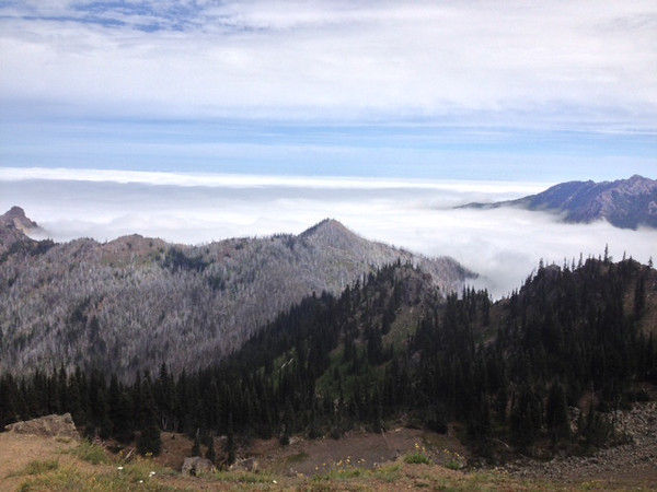 2013-08 Evelyn - Olympic National Forest (2)