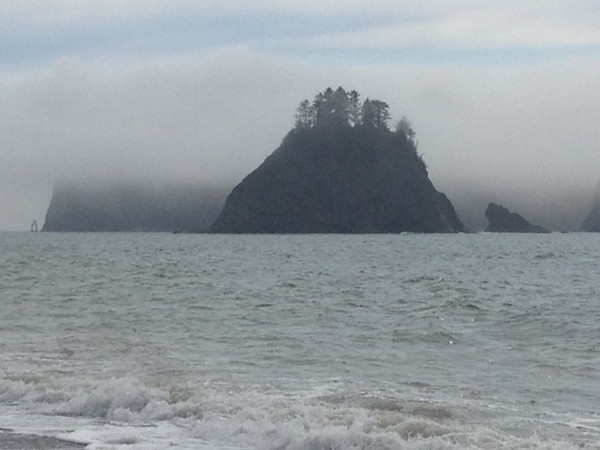 2013-08 Evelyn - Olympic National Forest (29)
