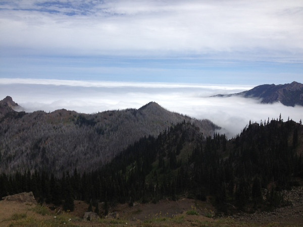 2013-08 Evelyn - Olympic National Forest (1)