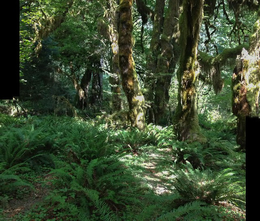 2013-08 Evelyn - Olympic National Forest (38)