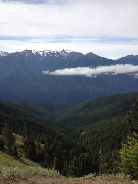 2013-08 Evelyn - Olympic National Forest (6)