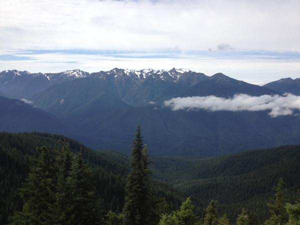 2013-08 Evelyn - Olympic National Forest (7)