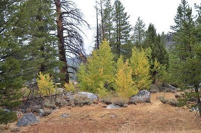 Fall Colors along Blue Lakes Road