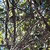 2013-09-29 bird in tree 2 San Luis Obispo Creek