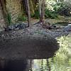 2013-09-29 under Broad St  Bridge Luis Obispo Creek