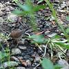 2013-09-29 bird San Luis Obispo Creek