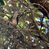 2013-09-29 bird in tree 1 San Luis Obispo Creek