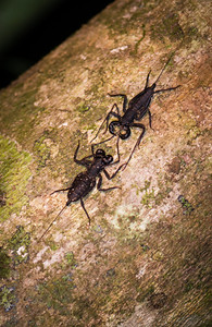 INSECT - jungle scorpions - meeting-2741