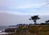 Santa Cruz waterfront. Pelicans overhead.