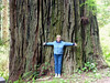 This is REALLY BIG! A California Redwood. CALIFORNIA!