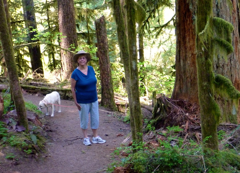 The rain forest here is much like around home on Vancouver island.