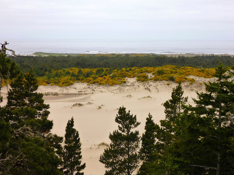 Oregon coast sand dunes.