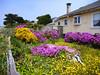 More Mendocino gardens.