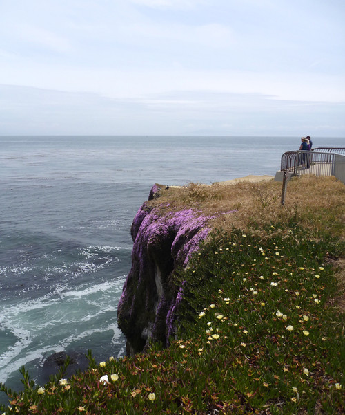 Wild flowers growing down the cliff face.
