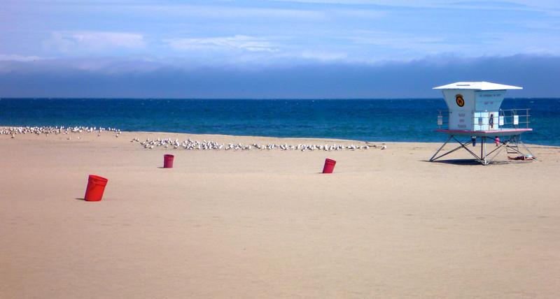 The seagulls believe in segregated beaches.