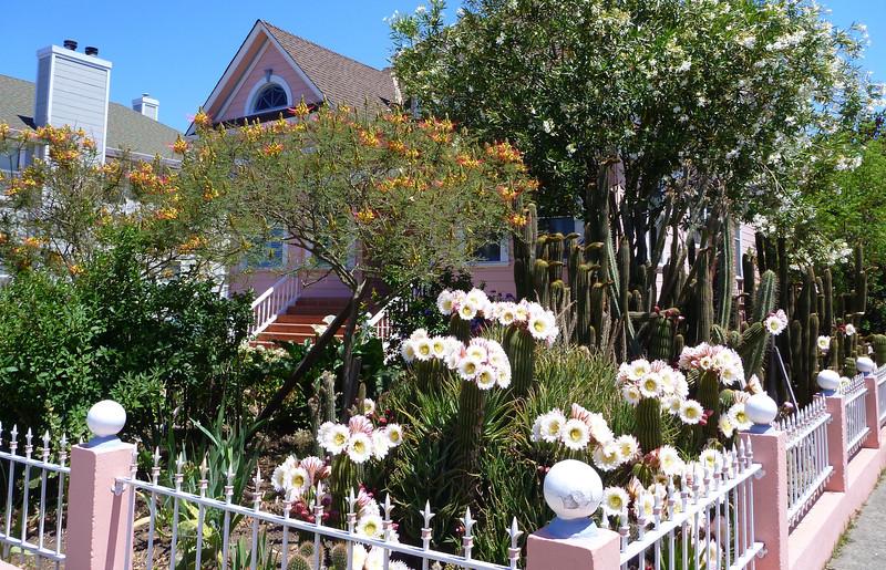 Cactus garden in Sonoma city