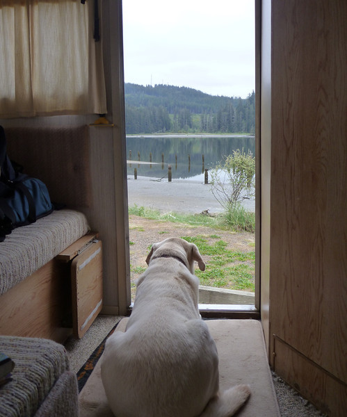 Boston enjoying the view from the camper