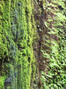 A dripping wall promotes moss too.