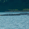 Salmon aquaculture has now been in Scotland for more than four decades