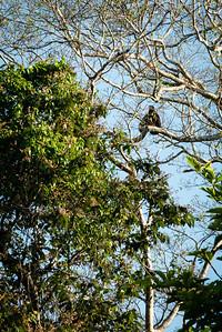 BIRD- eagle-0294